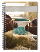 Two Cows Spiral Notebook