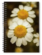 Two Daisies Spiral Notebook