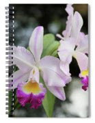 Two Delicate Orchids Spiral Notebook