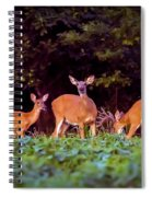 Two Doe And One Buck Spiral Notebook