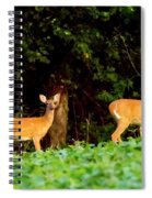 Two Doe Spiral Notebook