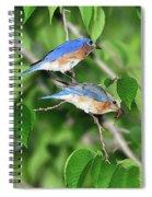 Two Eastern Bluebirds Spiral Notebook