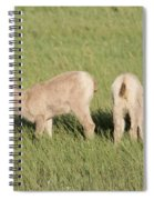 Two Ewes In The Badlands Spiral Notebook