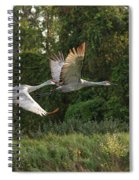 Two Florida Sandhill Cranes In Flight Spiral Notebook