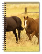 Two Horses In A Field Spiral Notebook