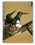 Two Hummingbird Babies In A Nest 5 Spiral Notebook