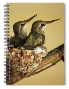 Two Hummingbird Babies In A Nest Spiral Notebook