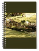 Two Ibises On A Log Spiral Notebook