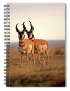 Two Male Pronghorn Antelopes In Alberta Spiral Notebook