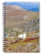Two Mountain Goats On Mount Bierstadt In The Arapahoe National Fores Spiral Notebook
