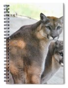 Two Mountain Lions Spiral Notebook