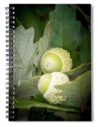 Two Oak Acorns Spiral Notebook