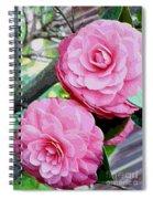 Two Pink Camellias - Digital Art Spiral Notebook
