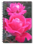 Two Pink Double Roses Spiral Notebook