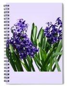 Two Purple Hyacinths Spiral Notebook