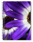 Two Purple N White Daisies Spiral Notebook