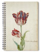 Two Red And White Tulips. Colombijn And Wit Van Poelenburg Spiral Notebook