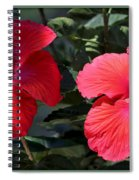 Two Red Hibiscus With Border Spiral Notebook