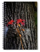 Two Red Leaves Spiral Notebook
