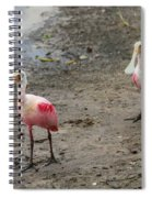Two Roseate Spoonbills 2 Spiral Notebook