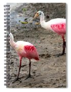 Two Roseate Spoonbills Spiral Notebook