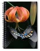 Two Spicebush Swallowtail Butterflies On A Turks Cap Lily Spiral Notebook