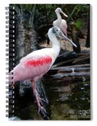 Two Spoonbills Spiral Notebook