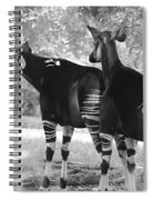 Two Stipers In Black And White Spiral Notebook