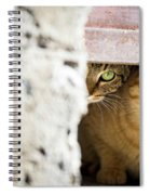 Two Stray Cats Spiral Notebook