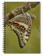 Two Tailed Pasha Butterfly Spiral Notebook