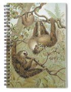 Two-toed Sloth Spiral Notebook