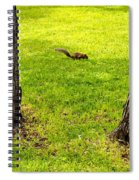 Two Trees And A Squirrel Spiral Notebook