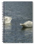 Two Trumpeter Swans At Oxbow Bend Spiral Notebook