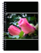 Two Unopen Pink Hibiscus Flowers Spiral Notebook
