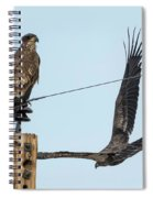 Two Views Of A Juvenile Bald Eagle Spiral Notebook