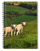 Two Welsh Lambs Spiral Notebook
