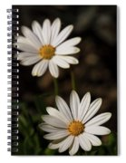 Two White Daisies  Spiral Notebook