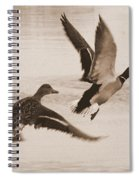 Two Winter Ducks In Flight Spiral Notebook