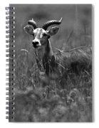 Uganda Cob Spiral Notebook