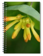 Umbrella Plant Spiral Notebook