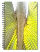 Under The Palm II Gp Spiral Notebook