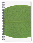 Underside Of A Coca Leaf, Erythroxylon Spiral Notebook