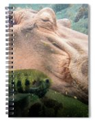 Underwater Hippo Spiral Notebook
