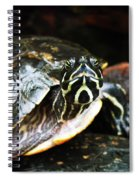 Underwater Turtle Spiral Notebook