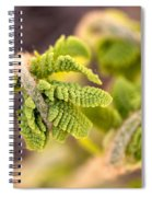 Unfolding Fern Leaf Spiral Notebook