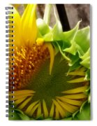 Unfolding Sunflower Spiral Notebook
