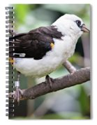 Unknown White Bird On Tree Branch Spiral Notebook