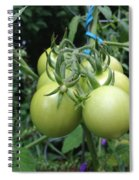 Unripe Cherry Tomatoes  Spiral Notebook