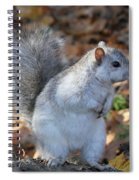 Unusual White And Gray Squirrel Spiral Notebook