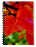 Up Close And Colorful Spiral Notebook